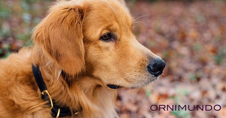 Ornimundo: onde o seu animal é feliz